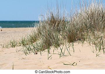 Beach at Lake Huron, Michigan, USA