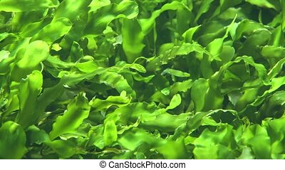 Seaweed And Marine Algae