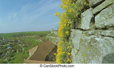 Flowers on stone wall - Growing on stone wall of yellow...