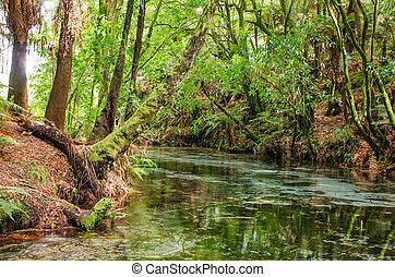Hamurana Springs, New Zealand - Te Puna-a-Hangurua in the...