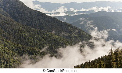 scenic view of mountain forests covering by fog.