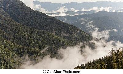 berg, Hülle, landschaftlich, Wälder, Nebel, Ansicht