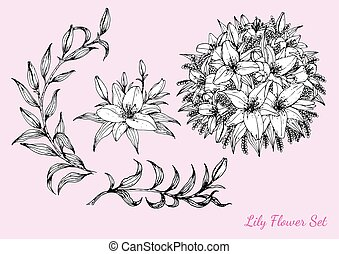 Lily flower vector by hand drawing.