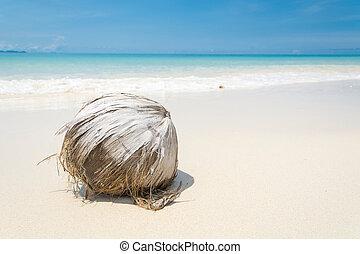 coconut on beach with blue sky