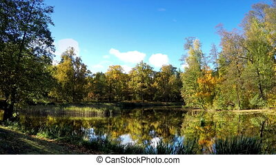 Autumn tree with bright foliage is reflected in the lake ,