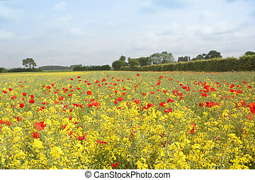 flower meadow - a colorful landscape with wild red poppies...