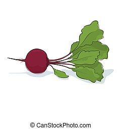Beet Root Vegetable on White Background - Beetroot, Beet...