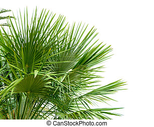 Palm Tree Leafs in Sunlight on the Bright Sky Background