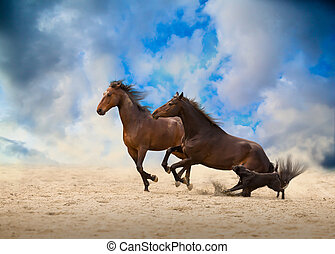 two brown horses run with the dog