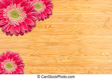 Pink Gerber Daisies with Water Drops on Bamboo Background