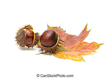 ripe fruit chestnut and maple leaf on a white background
