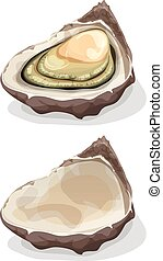 Oyster Shell - Illustration of a cartoon appetizing fresh...