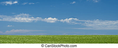 Green field landscape background with blue sky