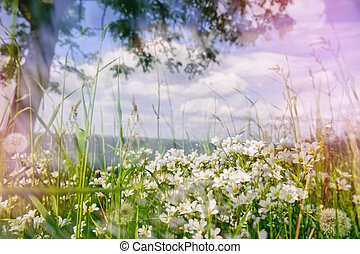 Summer landscape with wild white flowers