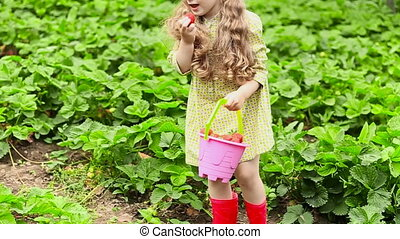 Girl eating strawberries - girl eating fresh strawberries...