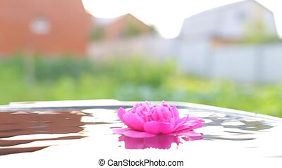 Beautiful human hands carefully holding flowers floating in the pool.