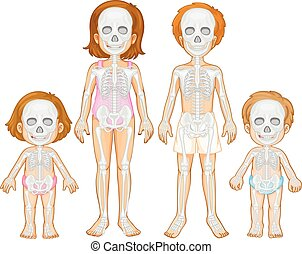 Skeletal system of human illustration