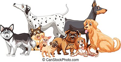 Group of different kind of dogs