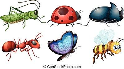 different type of insects illustration
