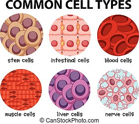 Diagram of common cell types illustration