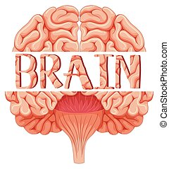 Human brain in closer look illustration