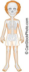 Skeletal system of human boy illustration
