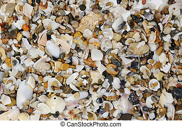 seashells background - background made with a pile of...