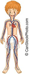 Circulatory system in human boy illustration
