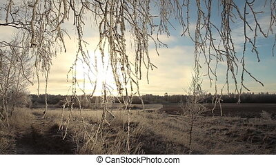 Frost birch branches on sunset sky background