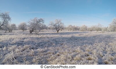 Winter landscape with frosted trees. The garden with apple...