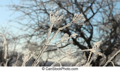 Winter scene with hoarfrost on branches close-up