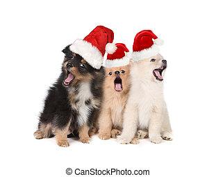 Christmas Puppies Wearing Santa Hats and Singing - Singing...