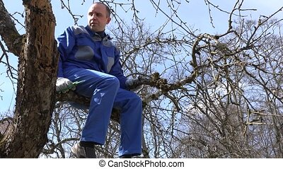 skilled grower man pruning branches with shears high on tree...