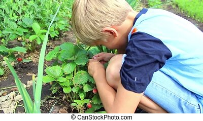 child eating fresh garden berries