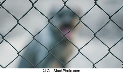 Dog Behind cage - Dog Behind Metal wire fence or cage