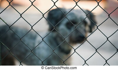 Dog at kennel - Dog Behind Metal wire fence or cage