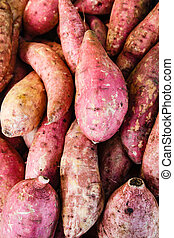 Raw sweet potatoes, sweet potato in the market. - Raw sweet...