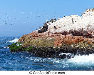 Ballestas Islands Reserve in Peru Ballestas islands are an...