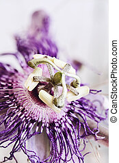 Passion Flower - Abstract macro of a Passion Flower with an...