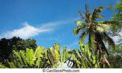 Palm tree and blue sky - Palm tree in tropical climate with...