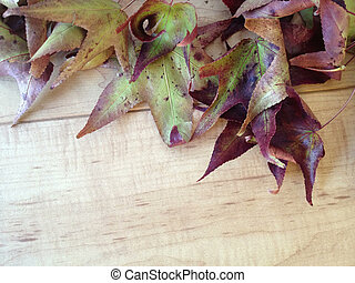 Fall leaves on wood background - liquidamber leaves against...