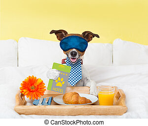 hotel room service wtih dog - jack russell dog in hotel...