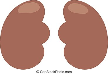 Human kidneys vector illustration.