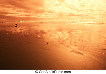 Dog at the beach in red light - Beach scene with dog and...