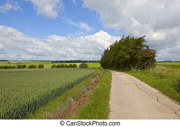 yorkshire wolds footpath - a scenic footpath beside a wheat...