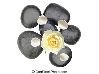 Black spa stones an white rose petals isolated on white...