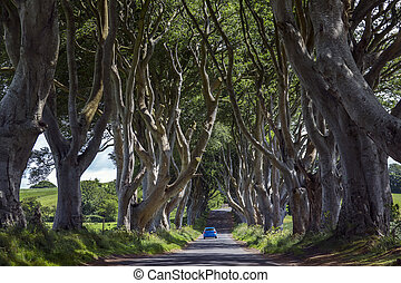 The Dark Hedges - County Antrim - Northern Ireland - The...