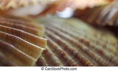 Flat shells macro pan video clip