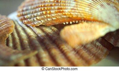 Flat seashells macro pan shot clip
