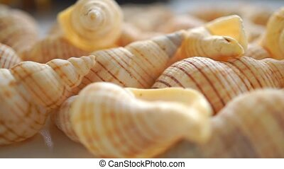 Small light shells macro pan video clip